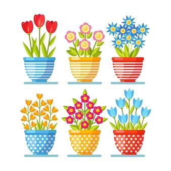Kwiaty w doniczce. kwiat roślin w botanicznej doniczce. koncepcja natury