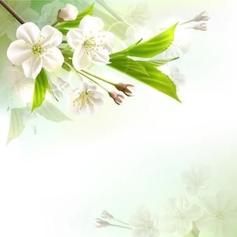 Kwitnąca gałąź drzewa o białych kwiatach