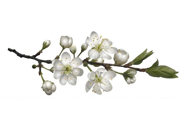 Kwitnąca gałąź wiśni z białymi kwiatami.