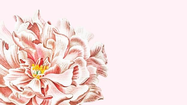 Kwitnąca kwiatowa tapeta z piwonii na różowym tle