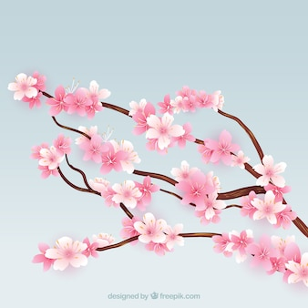 Kwitnąca wiśnia gałęzi drzewa
