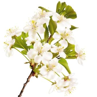 Kwitnąca wiśnia realistyczna gałąź.