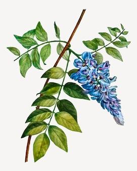 Kwitnące drzewo fasoli