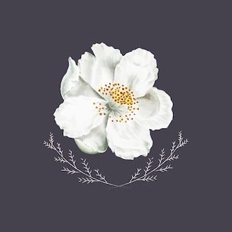 Kwitnący biały kwiat dzikiej róży