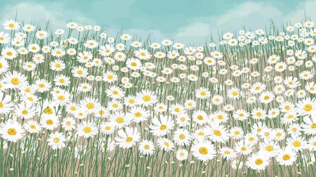 Kwitnący biały kwiat stokrotki w tle