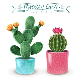 Kwitnący kaktus realistyczny zestaw 2 popularnych odmian roślin doniczkowych w kolorowe dekoracyjne doniczki zbliżenie