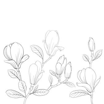 Kwitnący kwiat magnolii