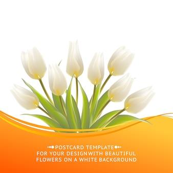 Kwitnący tulipan