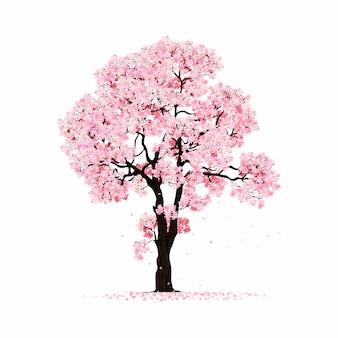 Kwitnących różowego drzewa sakura na białym tle