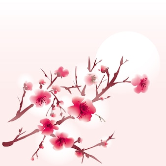 Kwitnie gałąź sakura
