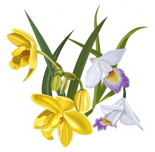 Kwitnie wektorową ilustrację z żółtą i białą orchideą
