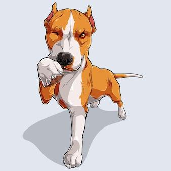 Ładny beżowy pies pitbull na białym tle na białym tle ilustrowany kolorowymi cieniami i światłami
