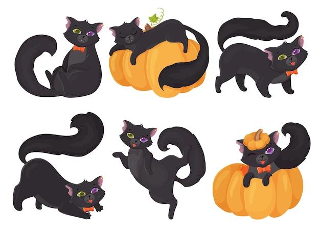 Ładny czarny kotek z różnymi oczami. śmieszny kot w różnych pozach z dynią. heterochromia u zwierząt.