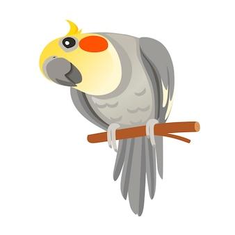 Ładny dorosły papuga normalny szary nimfy siedzący na gałęzi i patrząc na ciebie (nymphicus hollandicus, corella) ptak kreskówka projekt płaski wektor ilustracja na białym tle.
