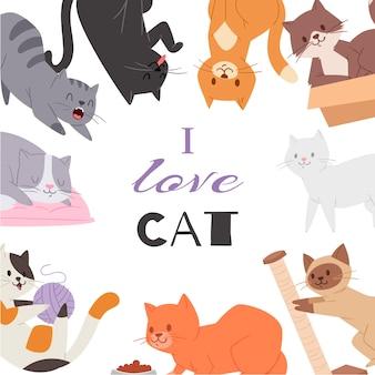 Ładny kot kotek plakat różnych ras kotów, zabawek i żywności. pussycats i love cat typografia.