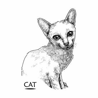 Ładny kot, ręcznie rysowane ilustracji
