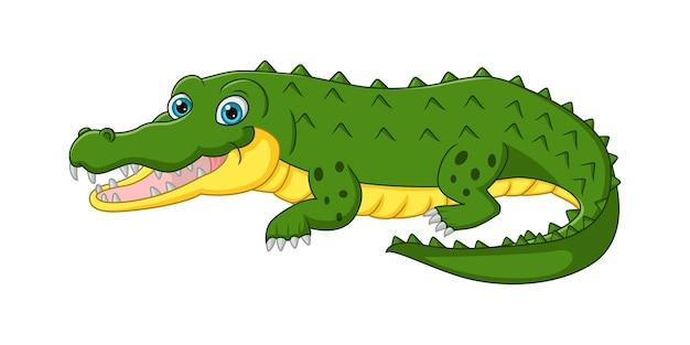 Ładny krokodyl kreskówka na białym tle