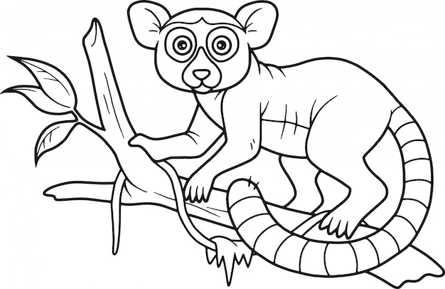 Ładny lemur