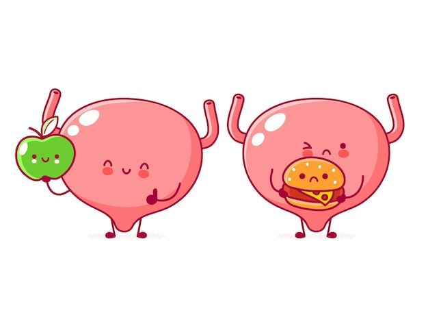 Ładny ludzki narząd pęcherza moczowego postać z jabłkiem i burgerem