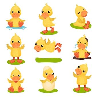 Ładny mały żółty zestaw znaków kaczątko, pisklę kaczki w różnych pozach i sytuacje ilustracje na białym tle