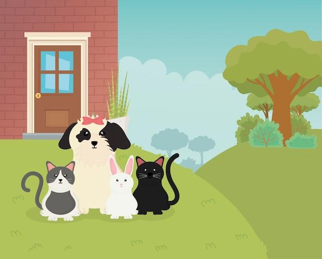 Ładny pies koty królik królik podwórku dom opieki dla zwierząt