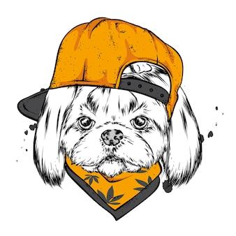 Ładny pies w czapce i okularach.
