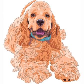 Ładny sportowy pies rasy amerykański cocker spaniel