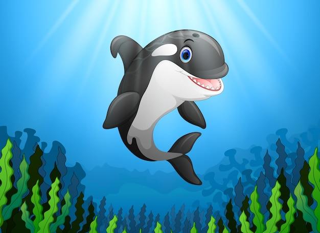 Ładny wieloryb zabójcy pod wodą