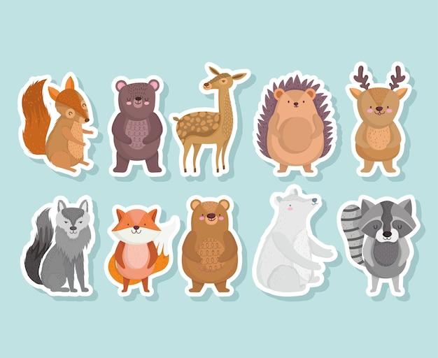 Ładny wiewiórka niedźwiedź jeż szop wilk lis zwierzę z gwiazdami w ikonach kreskówek