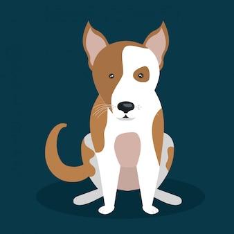 Ładny wygląd psa