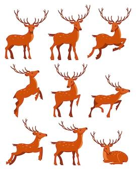 Ładny zestaw jeleni, zauważył jelenie w różnych pozach ilustracje kreskówek