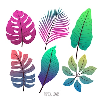 Ładny zestaw różnych zielonych liści tropikalnych na białym tle