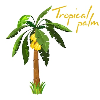 Łagodne owoce bananów na palmie, egzotyczne słodkie owoce.