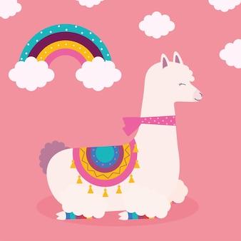 Lama z białej wełny