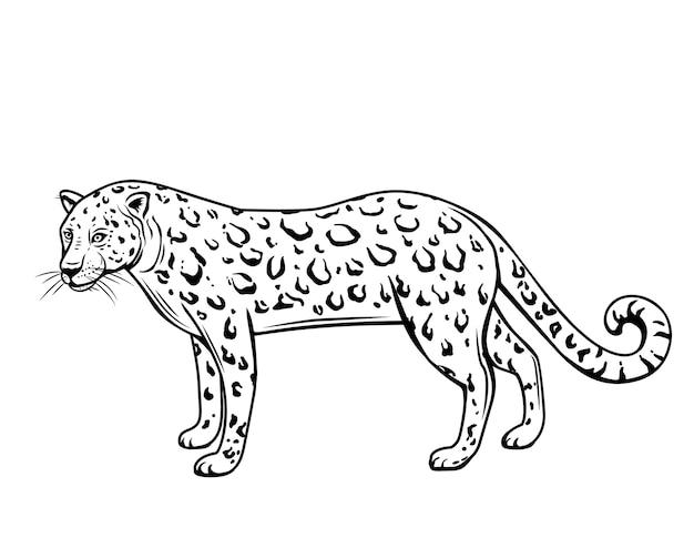 Lampart, zarys zwierzęcia. panthera, puma lub dziki kot rysunek ilustracja na białym tle.