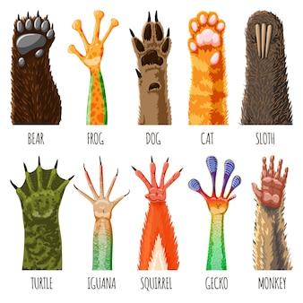 Łapa zwierząt zwierzęcych zwierząt domowych pazur lub ręka kota lub psa i niedźwiedzia w łapie lub małpa stopa ilustracja łapy ssaków cześć zestaw na białym tle