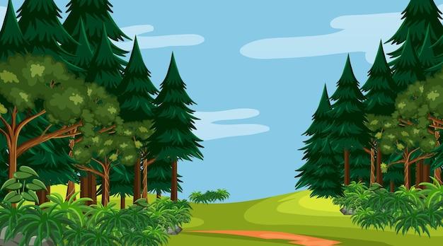 Las deszczowy lub las tropikalny na scenie w ciągu dnia
