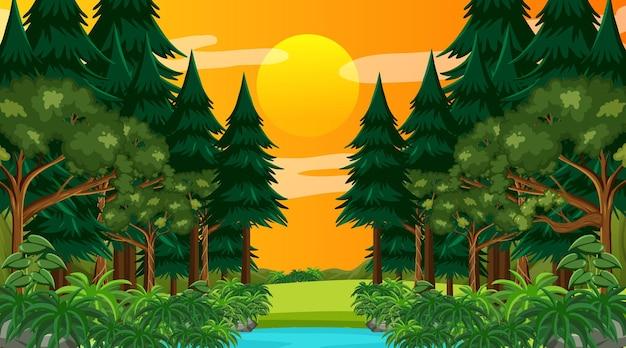Las deszczowy lub las tropikalny na scenie w czasie zachodu słońca