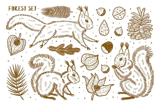 Las zestaw elementów, clipart. zwierzęta, przyroda, rośliny. wiewiórka, sosna, orzech, gałąź, nasiona, pęcherzyca, czereśnia zimowa. sylwetka.