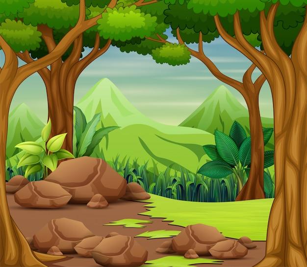Lasowa scena z drzewami i pięknym krajobrazem
