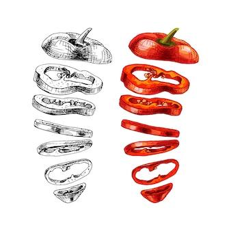 Latające kawałki słodkiej czerwonej papryki. wektor wzór kreskowania ilustracja kolor. na białym tle. ręcznie rysowane projekt