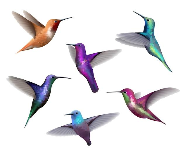 Latające kolibry. małe kolorowe ptaki egzotyczne dżungla kolorowe małe kolibry realistyczna kolekcja tropikalna. koliber kolorowy dziób, latający tropikalny ilustracja