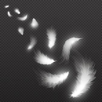 Latające lekkie pióra łabędzia pióropusz na przezroczystym. ilustracja. białe piórko spada, mucha puszysty pióropusz
