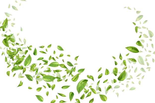 Latające lub spadające liście herbaty lub mięty na białym tle