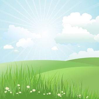 Latem krajobraz z stokrotki w trawie