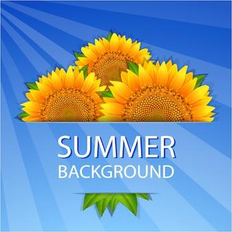 Lato słoneczniki tło