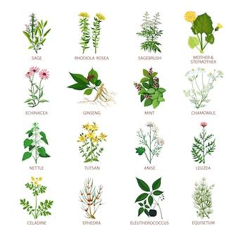 Lecznicze zioła ikony płaskie