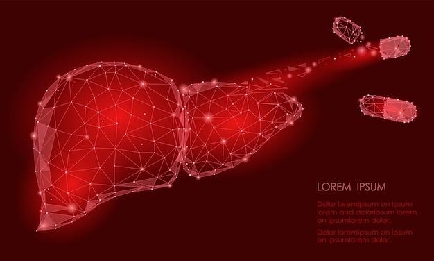 Lek rozkładający regenerację leczenia. ludzki narząd wewnętrzny wątroby
