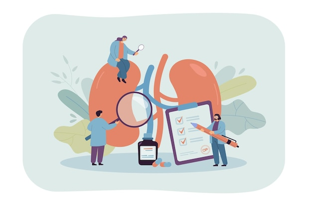 Lekarze badający nerki dawcy w klinice. osoby medyczne sprawdzające ludzki narząd pod kątem operacji płaskiej ilustracji