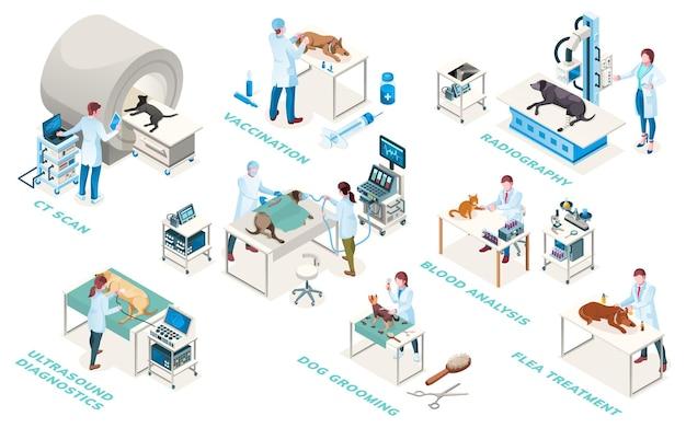 Lekarze kliniki weterynaryjnej, usługi diagnostyczne i lecznicze, ikony izometryczne. chirurgia weterynaryjna, badanie usg, analiza krwi, radiografia i szczepienia